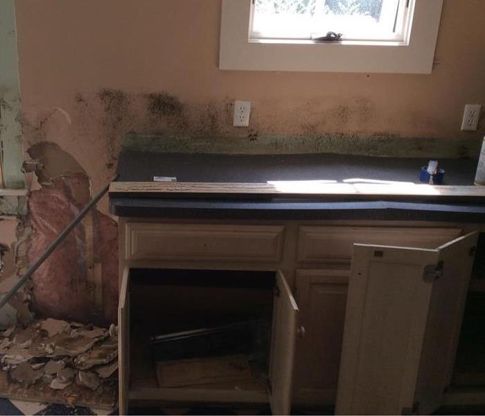 Kitchen mold-Plymouth, MA